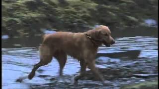 torrento.net - Правосудие Стоуна / Stone Cold (2005) - трейлер (trailer)