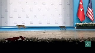 Cats Steal The Stage At The G20 Summit