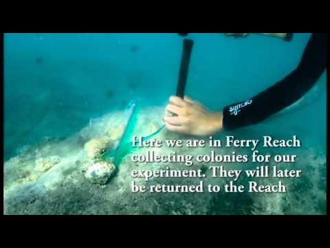 REU at BIOS - Thermal Resilience in Coral
