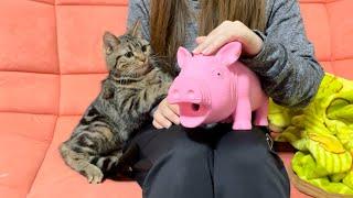 子猫を無視して豚を可愛がってたら嫉妬してこうなりましたw
