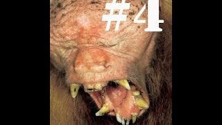 Самые уродливые животные мира #4