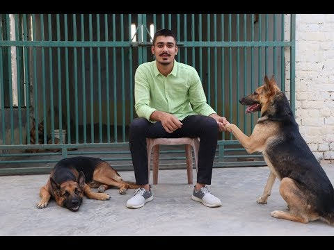 All About German Shepherd| Purebreed vs Mixed breed | ORIGIN of its LIFE| Rachit Panghal| INDIA|