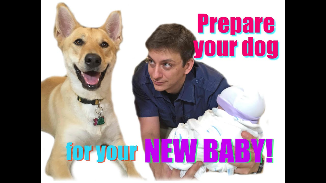 How to Prepare Your Dog for the Vet forecast