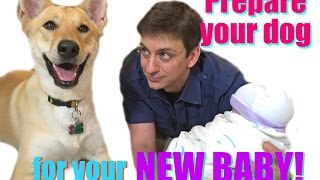 How To Prepare Your Dog For Your New Baby!