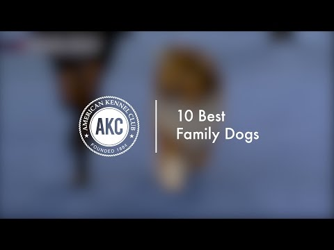 10 Best Family dogs