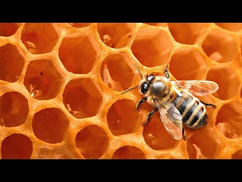 Everything you Have Ever Wanted to Know about Honeybees w/ Dr. Reese Halter