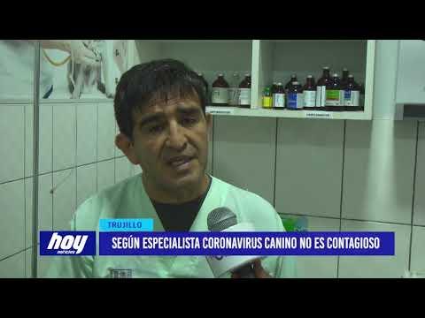 Según Especialista Coronavirus Canino No Es Contagioso