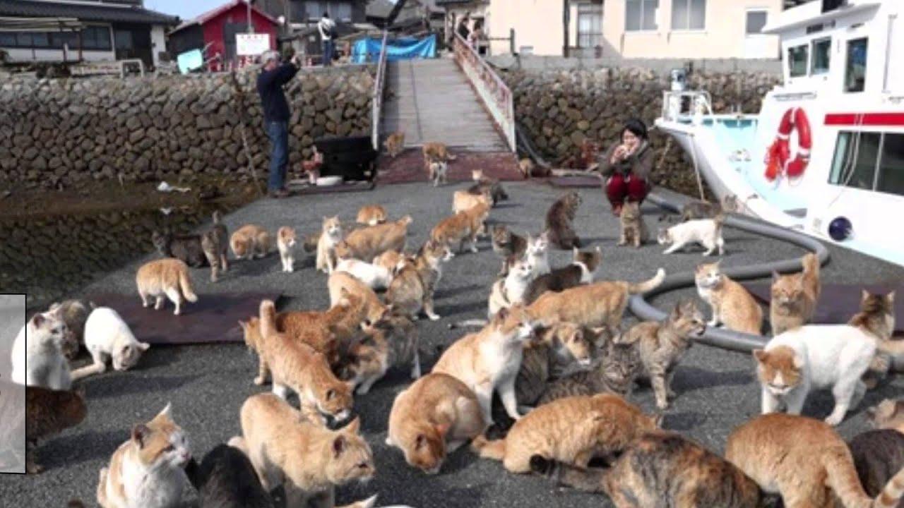 猫の島 Cat S Island 青島 Dash島のとなり瀬戸内海の島 Funycat Video Youtube