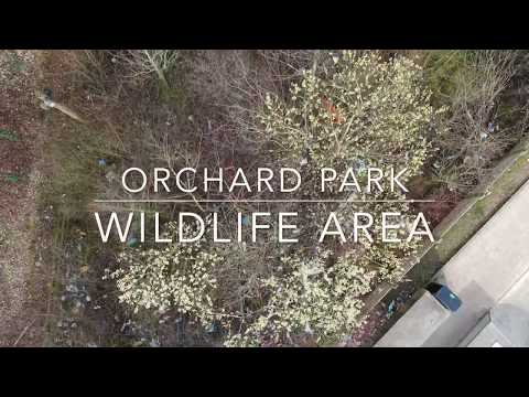 Orchard Park Wildlife Area has a huge litter problem and we need to fix it