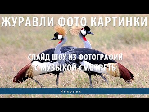 Птицы Карелии Путешествие по Карелии