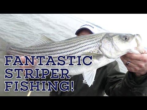 CRAZY DIVING BIRD ACTION! Let's Fish #9 SouthEAST Lake Murray, South Carolina Striped Bass Fishing