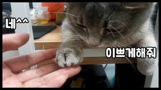 고양이】 고양이가 네일아트를 했어요(?)!!  (Cat and Daily routine)