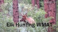 Elk Hunting | WMAT | Unit 8 Trophy Bull Elk