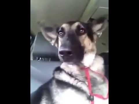 Q Dog Dance Dog Dancing | F...