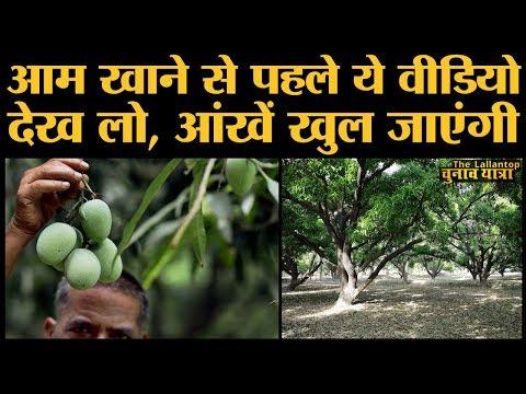 Mango-fruit of India माने आम के सबसे चौचक किस्से, कलम से मुकदमे तक