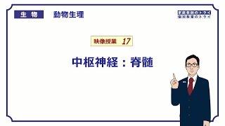【高校生物】 動物生理17 中枢神経:脊髄(23分)