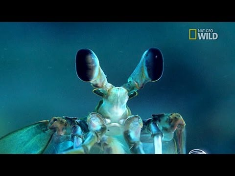 Wonders of the Deep Blue Sea