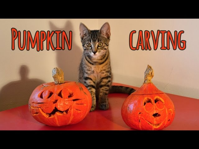 Halloween cat: Pumpkin carving with my human