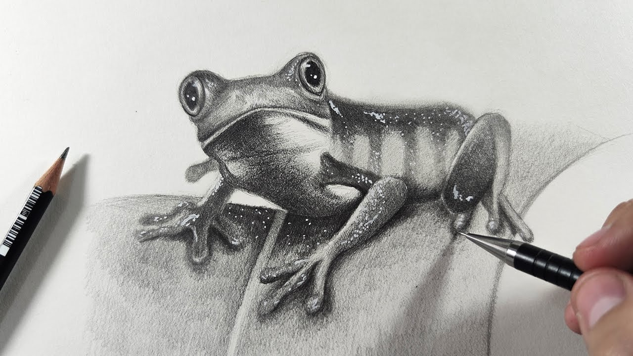 How To Draw A Frog With Pencil Step By Step Easy Realistic Youtube How to draw a frog step by step! how to draw a frog with pencil step by step easy realistic