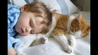 Кошки лечат Аутизм