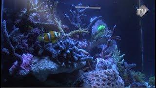 Le salon de l'aquariophilie et de la terrariophilie