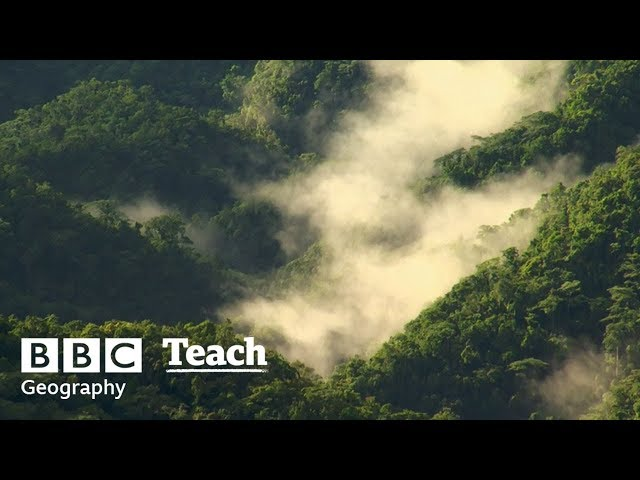 Rainforests | Geography - Ecosystems and Biomes