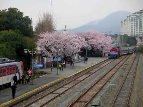 Korail 진해역 단체열차 대체 鎮...