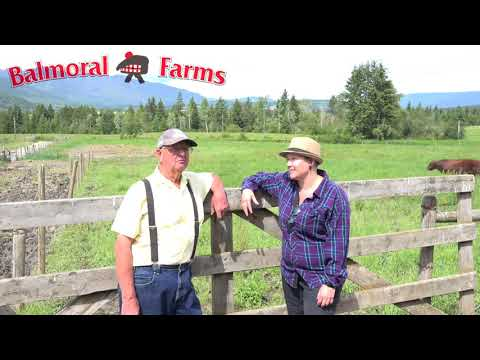 Balmoral Farms  Bringing the Shuswap premium Grass Fed Beef