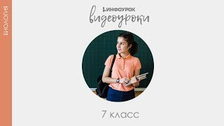 Тип Членистоногие Класс Ракообразные | Биология 7 класс #22 | Инфоурок
