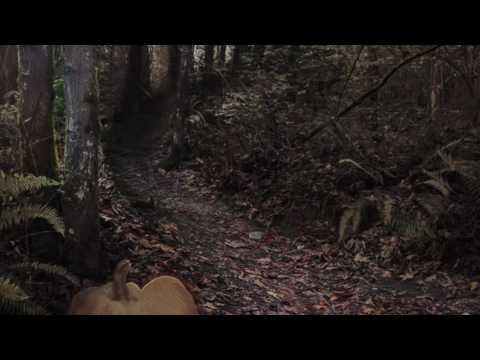 & The Magic Door Dark Forest Adventure Walkthrough on Alexa - YouTube