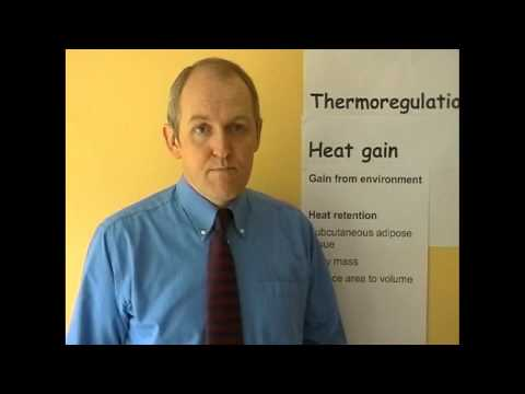 Thermoregulation 2, Heat gain mechanisms