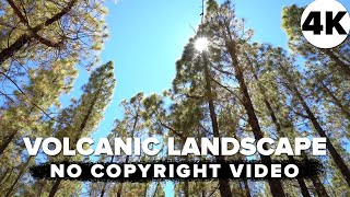 ... - free download, without music. for commercial use. no copyright vlog video. vid...