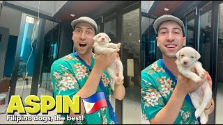 Adopting ASPIN Puppy sa DREAM HOUSE 🏠 + Electric Fence at Pest Control 🇵🇭