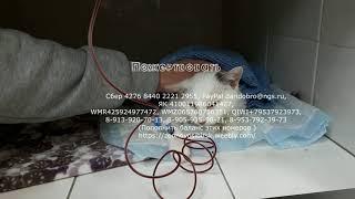 День когда заболела твоя кошка Спасение Аришы Донорской кровью animal shelter rescues cat