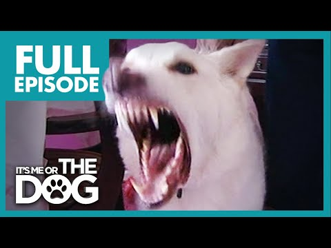 Monster German Shepherd: Ben | Full Episode | It's Me or the Dog