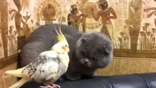 Кот и попугай,, Funny cats, Прикольные,смешные, ржачные,веселые коты,кошки ,котята1