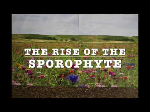 The Rise of the Sporophyte: A Story of Evolutionary Triumph Told Through Clay