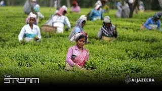 The Stream - The real cost of your cup of tea