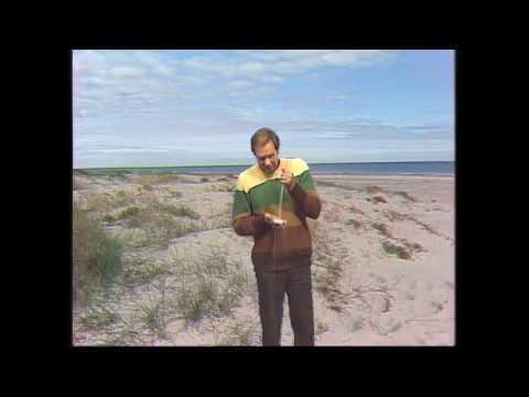 The Secret of Singing Sand