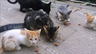Four Kittens and two cats want food