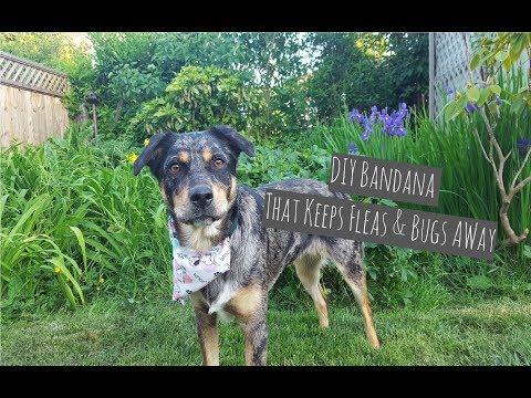 DIY Natural Dog Bug Spray Repellent and DIY Easy Sew Dog Bandana