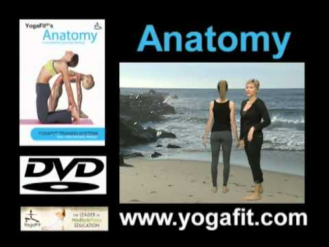 YogaFit® Anatomy - Yoga DVD Preview - YouTube