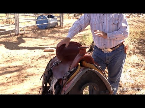 The Rancher Saddle for Mules and Donkeys