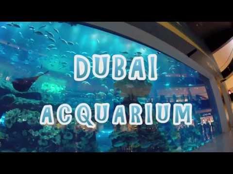 Dubai Mall - Aquarium magnific (Acquario) UAE