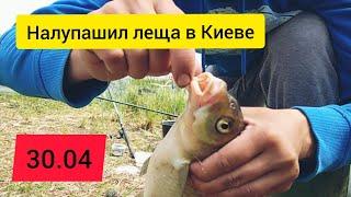 Поймал много леща в Киеве, клёв как с пулемета, лещ на фидер в Киеве