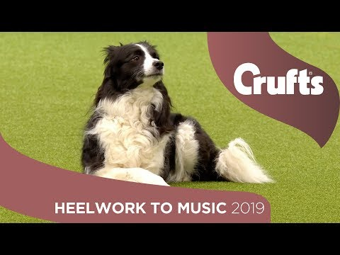 Freestyle International Heelwork to Music - Part 2 | Crufts 2019