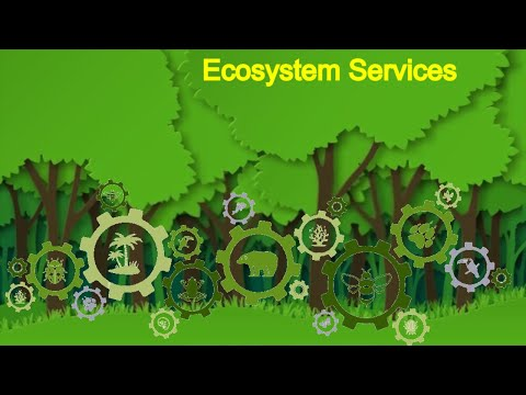 Environment Management System (EMS) | ECOSYSTEM SERVICES