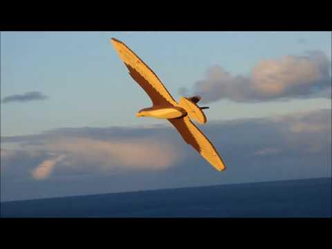 Buzzard Glider