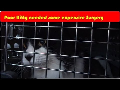 Tomcat's Expensive Surgery