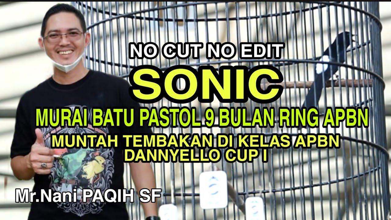 GAGAL JUARA! Murai Batu Pastol  SONIC Ring APBN Jadi Rebutan | DANNYELLO CUP 1 Serang Banten